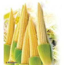 Кукуруза Беби корн