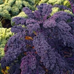 Капуста листовая Кале Скарлет (Kale Scarlet)
