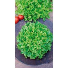 Салат Балконный зелёный