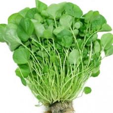 Кресс-салат широколистный