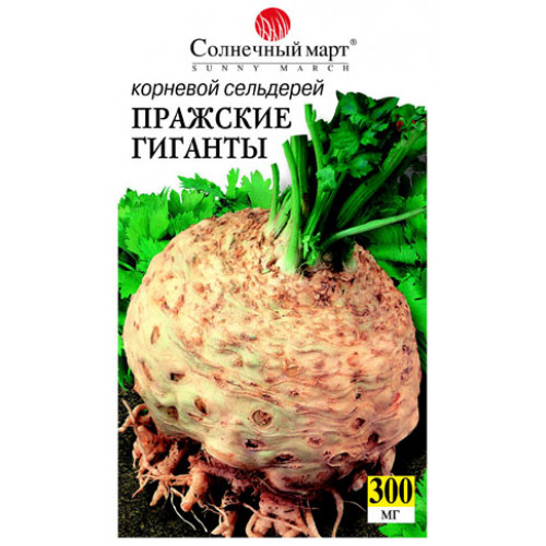 Сельдерей корневой выращивание пражский гигант