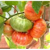 Разноцветные и полосатые томаты