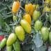 Стыдливый Румянец ( Blush tomato)