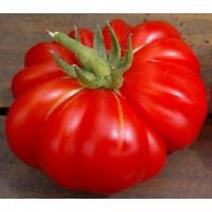Итальянский Ребристый ( Costoluto Fiorentino tomato)