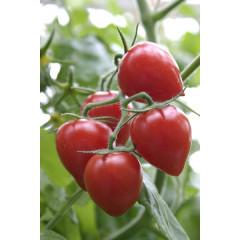 Клубничка ( Tomatoberry)