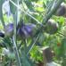 Blue Pear, Синяя груша